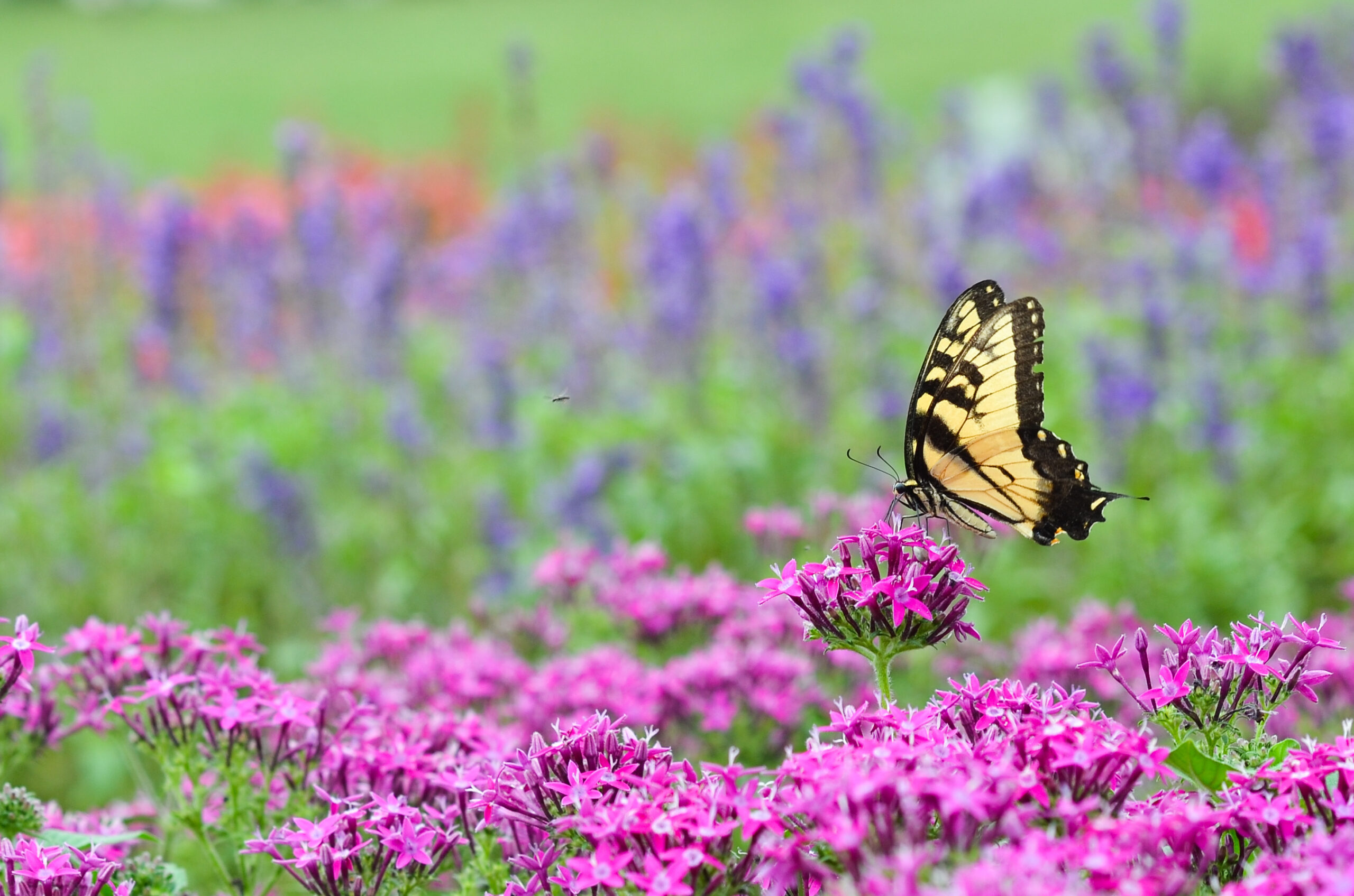 pollinator landscaping services moretti westchester new york
